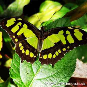 Bexley's Butterfly Jungles shuts its doors due to Covid-19