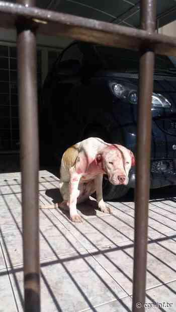 Polícia resgata mais dois Pitbulls em situação de maus-tratos em Curitiba - CGN