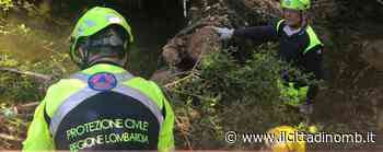 Usmate Velate: rimossi tre alberi caduti nell'alveo del torrente Molgora - Il Cittadino di Monza e Brianza