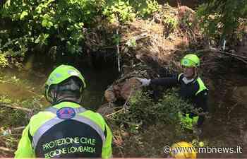 Usmate Velate: la Protezione Civile rimuove tre alberi nell'alveo del Molgora - MBnews