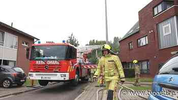 Twee katten overleven appartementsbrand in Temse niet - TV Oost