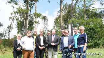 Ense: Gemeinde findet eine Fläche für den geplanten Bürgerwald - Soester Anzeiger