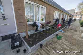 Inwoners van Voerendaal die hun tuin groener maken, krijgen kosten grotendeels vergoed - De Limburger
