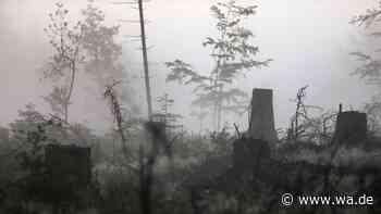 Fast alle Fichten abgestorben: Borkenkäfer vernichtet in Hamm ganze Baum-Art - Kampf gegen Klimawandel - Westfälischer Anzeiger