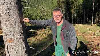 Sonneberg: Dieser Mann kann den Borkenkäfer riechen - MDR