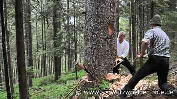 Schiltach: Wie früher: Tanne mit der Axt gefällt - Schiltach - Schwarzwälder Bote