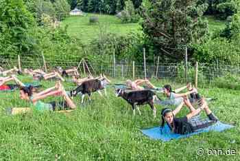 Entspannen beim Ziegen-Yoga in Gernsbach – Teilnehmer sind begeistert - BNN - Badische Neueste Nachrichten