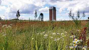 Kamp-Lintfort: Heuernte auf der Landesgartenschau - NRZ