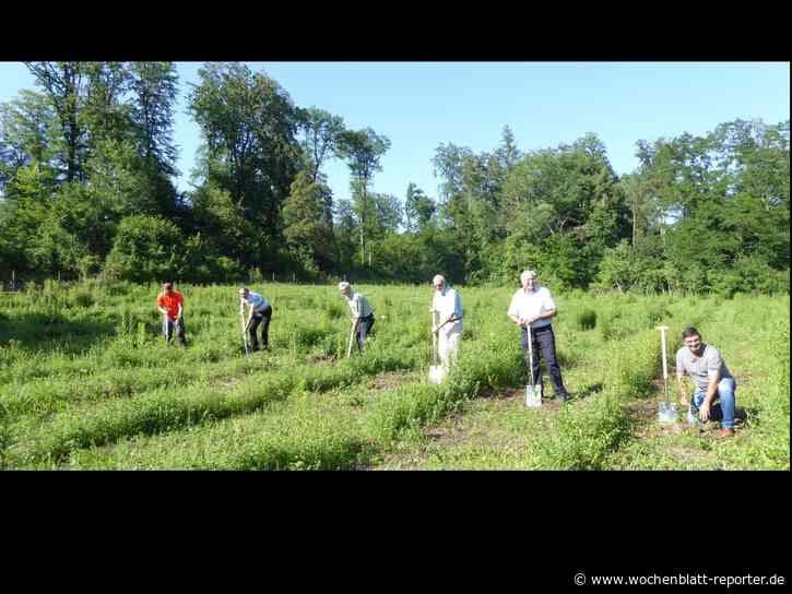 """Ubstadt-Weiher pflanzt 4000 Bäume für den Klimaschutz: Die Gemeinde Ubstadt-Weiher beteiligt sich bei der Aktion """"1000 Bäume für 1000 Kommunen"""" des Gemeindetags Baden-Württemberg, um ein Zeichen gegen den Klimawandel zu setzen - Ubstadt-Weiher -"""