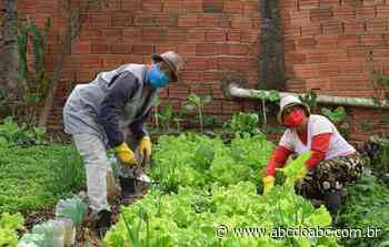 Hortas comunitárias em Diadema ajudam promover o consumo de orgânicos - ABCdoABC