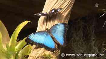 Welt-Vogelpark Walsrode: Hier fliegen jetzt auch Schmetterlinge - Sat.1 Regional