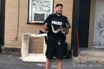 Loose python found wandering Ontario city's downtown - UPI News