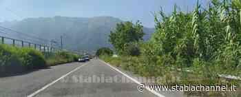 Castellammare - L'erba invade la corsia del raccordo autostradale, a quando una scerbatura? - StabiaChannel.it