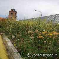 Albanella. Campo sportivo tra degrado, buche, rifiuti ed erba alta - Voce di Strada