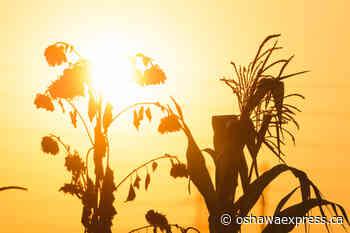 Prolonged heat warning for region - Oshawa Express