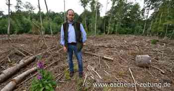 Waldsituation im Kreis Heinsberg: Niemand weiß, wie sich die Situation entwickeln wird - Aachener Zeitung
