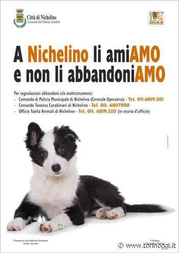 Il Comune di Nichelino scende in campo contro l'abbandono degli animali - TorinOggi.it