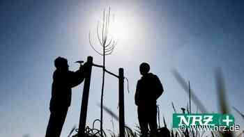 Isselburg: Geschenkte Bäume für Häuslebauer und Familien - NRZ