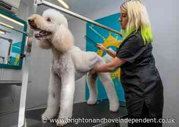 Brighton dog groomer can give your pet wings - Brighton & Hove Independent
