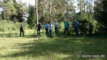 Landschaftspflege bei Hohenstein: Wo die Rinderherde zwischen Bäumen umherstreift - SWP