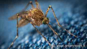 Covid-19 e zanzare, Istituto superiore di sanità: «Non sono in grado di trasmettere il virus» - Greenreport: economia ecologica e sviluppo sostenibile