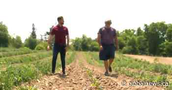 Ontario farmers 'concerned' as crops continue to die amid drought: 'It's bad' - Globalnews.ca