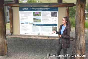 Research ongoing for local grasslands - Merritt Herald - Merritt Herald