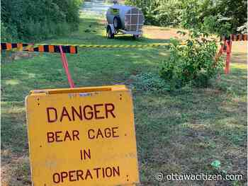 Black bear that's made a home in Mud Lake to be relocated: NCC
