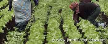 Il manque d'eau pour les cultures maraîchères
