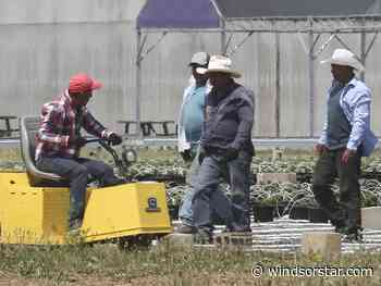 Farm minister says undocumented workers won't be targeted