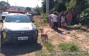 Crianças encontram cadáver em córrego de Ibaiti - Folha Extra