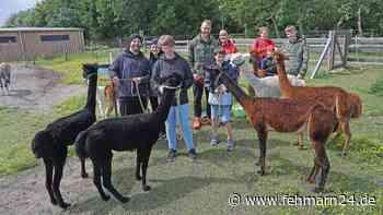 Mit Alpakas spazieren gehen in Wallnah auf Fehmarn Kurse buchen in Gruppen wandern - fehmarn24