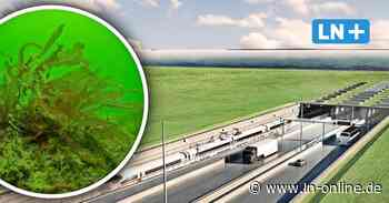 Riffe vor Fehmarn: Nabu fordert Stopp des Fehmarnbelttunnels - Lübecker Nachrichten