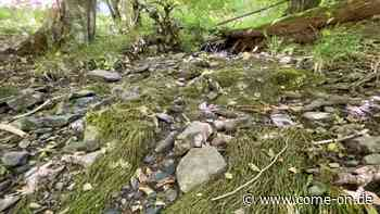 Schleipe-Tal in Kierspe: Kleines Naturschutzgebiet war früher ein Industriestandort - Meinerzhagener Zeitung