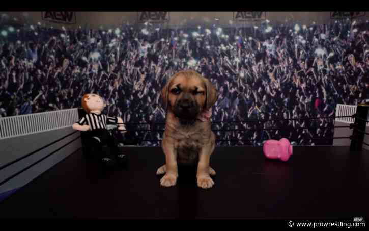 WATCH: The First Ever All Elite Wrestling Puppy Battle Royale