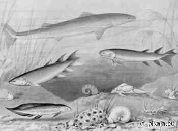 Un grande riscaldamento climatico causò l'estinzione di massa del Devoniano - Pikaia