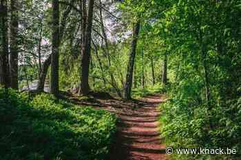 'Vlaanderen kapt 21 procent minder bomen tegenover 2016'
