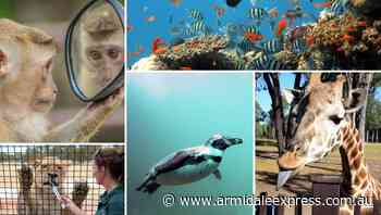 The Virtual Traveller: zoos around the world - Armidale Express