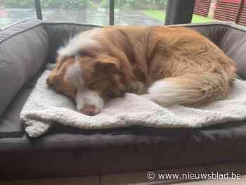 Hond tijdlang kritiek na eten van rattengif in Peltse villawijk