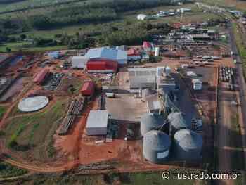 Levo Alimentos inicia o abate de frangos em Umuarama com planos promissores - Umuarama Ilustrado