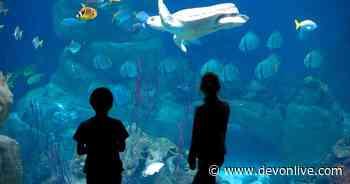 National Marine Aquarium officially back after three month hiatus - Devon Live