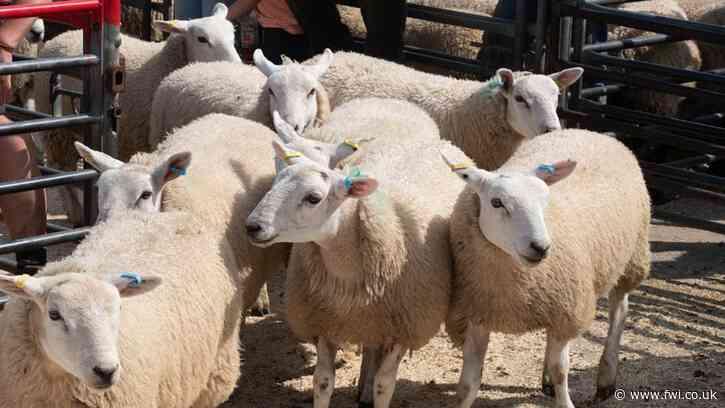 Lower-cost MV scheme targets commercial flocks
