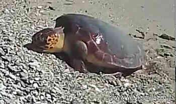 Area Marina Protetta Capo Milazzo, per la prima volta il video della escursione di una tartaruga Caretta Caretta - Oggi Milazzo - OggiMilazzo.it