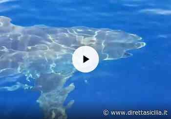 Avvistato enorme squalo vicino alla spiaggia di Milazzo (VIDEO) - Diretta Sicilia