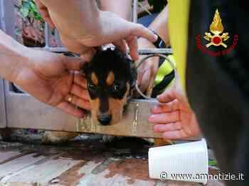 Milazzo - Cucciolo di cane incastrato in un cancello, salvato dai Vigili del Fuoco - AMnotizie.it