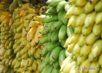 Produtores de banana levam demandas ao secretário da agricultura em Guaramirim - Jornal do Vale do Itapocu