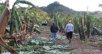 Alesc aprova indicação de Caropreso que pede socorro aos agricultores afetados por ciclone - OCP News