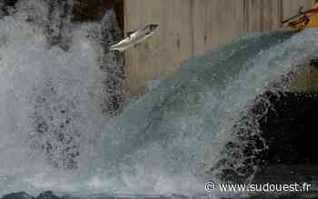 Oloron-Sainte-Marie : Le millième saumon de l'année a remonté le gave d'Oloron - Sud Ouest