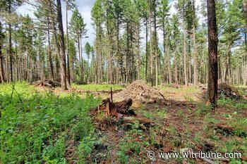 Wildfire crews to burn Fox Mountain fuel management woody debris - Williams Lake Tribune