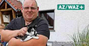 Wolfsburg: Erneuter Anschlag auf Katzen in Reislingen-West? - Wolfsburger Allgemeine